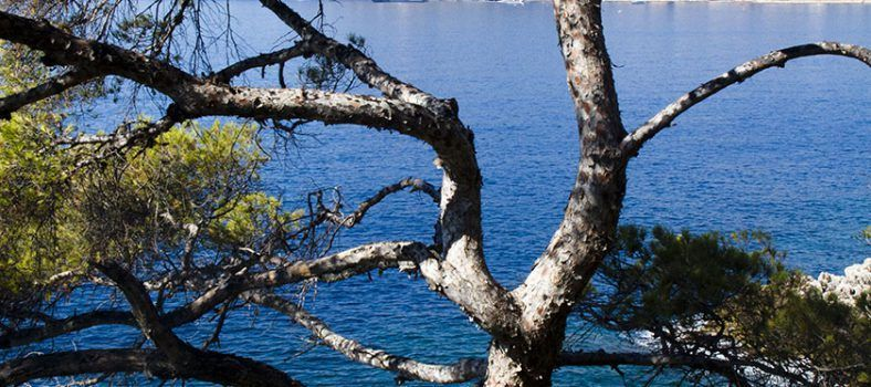 Cote d'Azur Lifestyle Mediterranean Twisted Pines @MKSeales