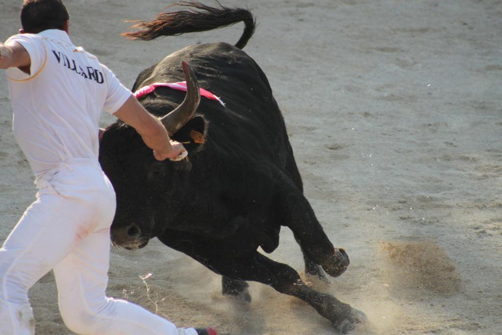 Cowboy Culture Bulls Rasateurs Course Camarguaise Provence @PerfectlyProvenceCowboy Culture Bulls Rasateurs Course Camarguaise Provence @PerfectlyProvence