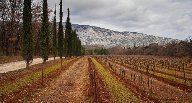 Domaine Richeaume Aix-en-Provence ProvenceWineZine