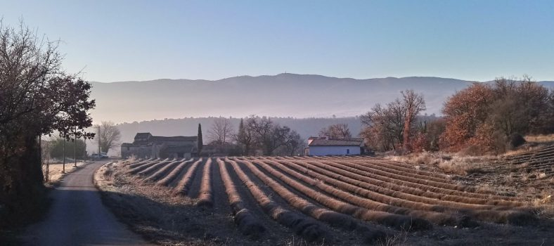February Provence @VaucluseDreamer