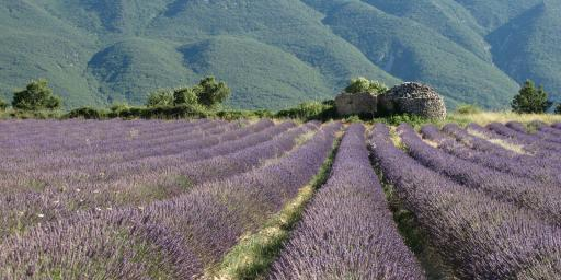 Learn French Provence Programs FRANCI DISCENDUM