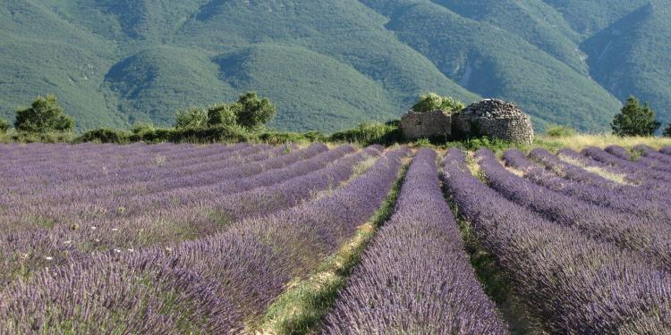 Learn French Provence FRANCI DISCENDUM