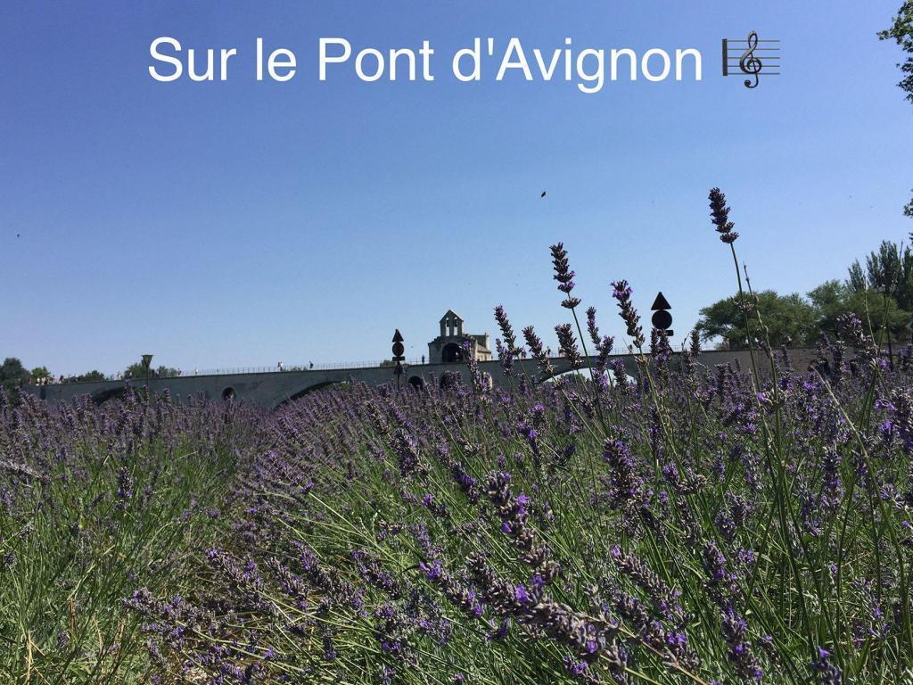 Travel Provence Avignon pont