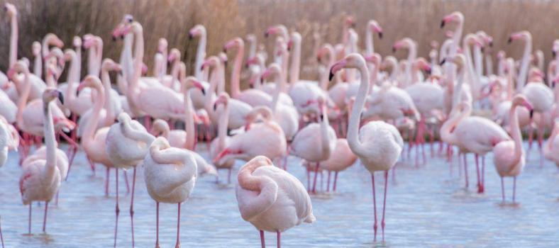 Visit Pink Flamingos Camargue