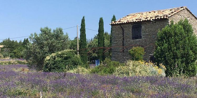 Expat Living in Provence Provence Lavender Fields Vaucluse Dreamer
