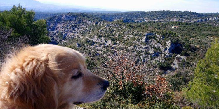 Luberon Dog Walk Abbaye de Senanque Gordes @Vauclusedreamer