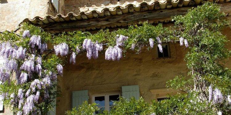 Mas d'Augustine Luxury B&B Expat Life Flowers in Bloom