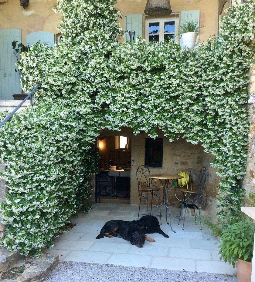 Mas d'Augustine Luxury B&B Expat Life dogs