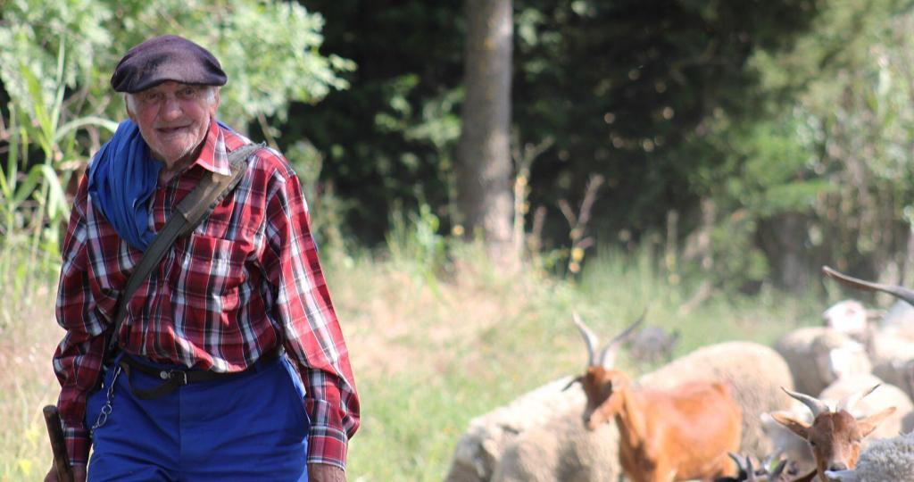 Transhumance Provence Shephard
