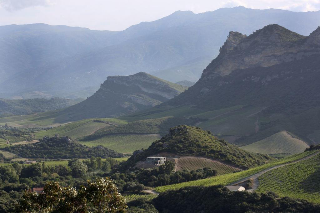 Corsica Vineyard Views