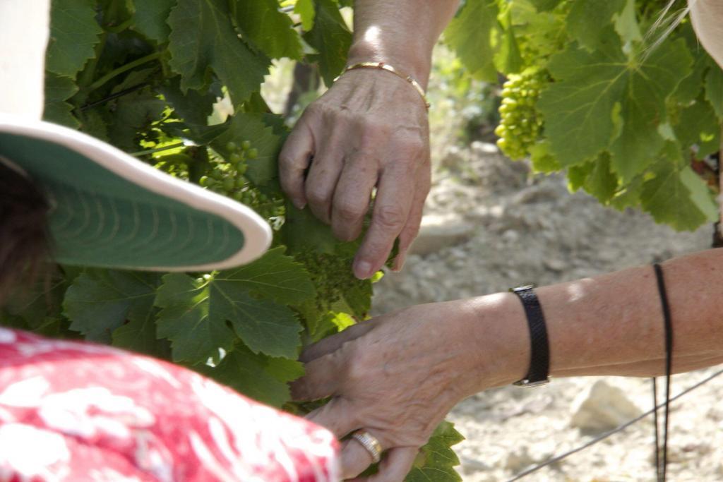Chêne Bleu Extreme Wine La Verrière @perfectlyprovence