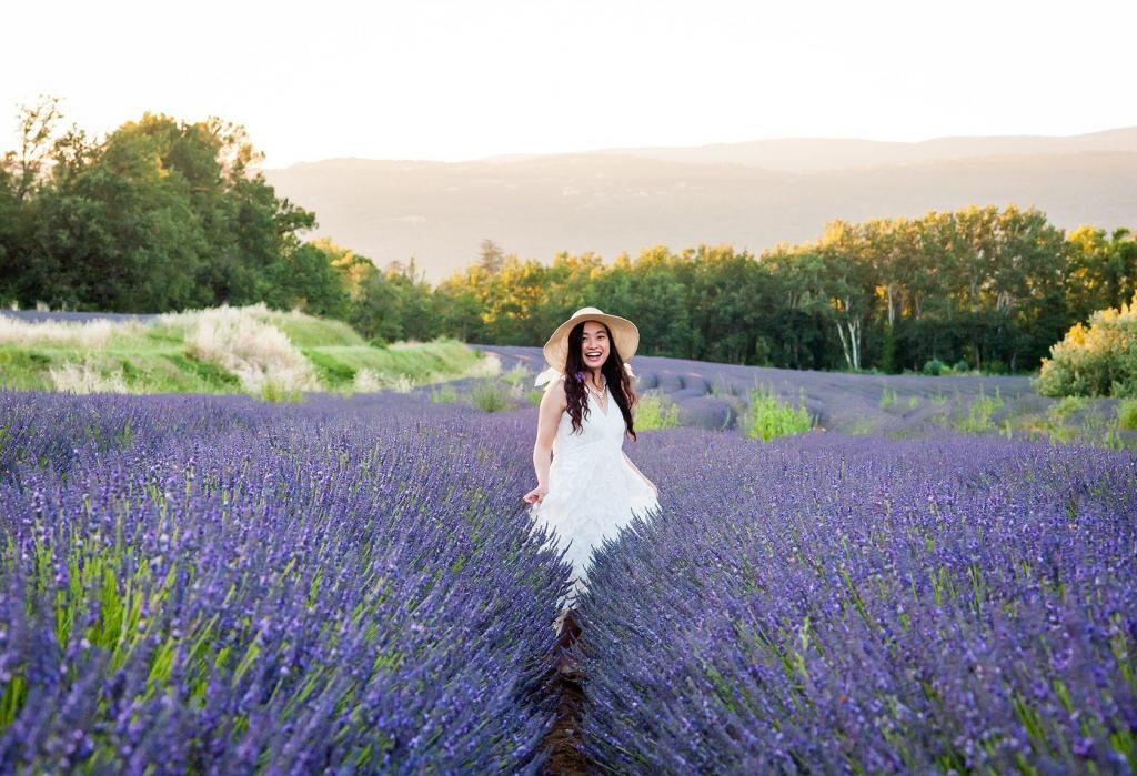 Capturing Provencal Scenes Lavender Fields Provence