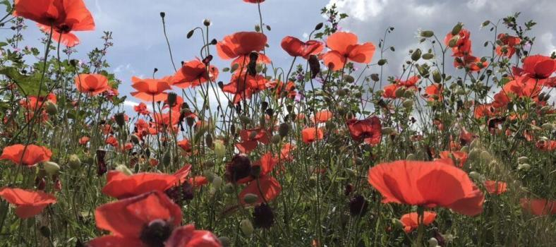 Hiking Provence Spring Poppies
