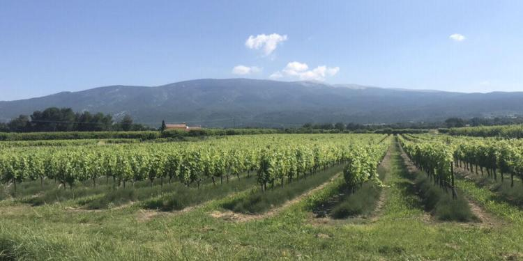 Tips Cycling Mont Ventoux