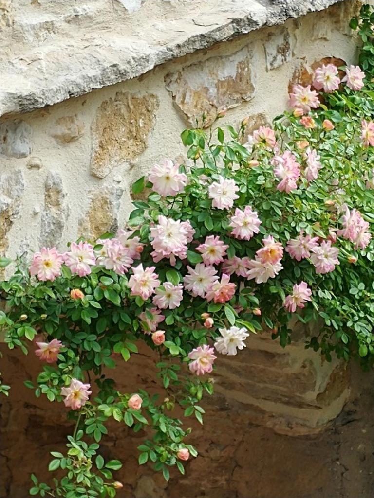 Mas d'Augustine Spring 2018 Garden