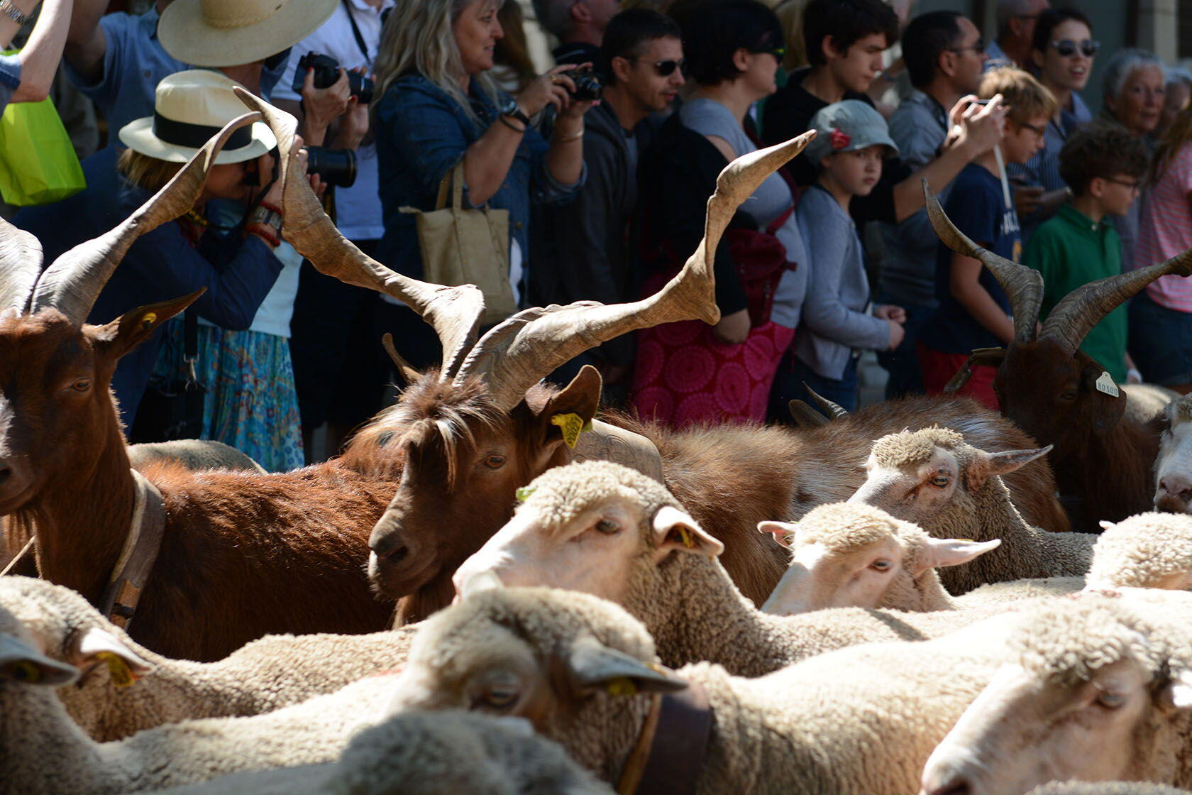 Family-Friendly Holidays Provence Transhumance