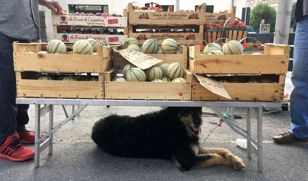 Insiders Market Tour Provence Dogs