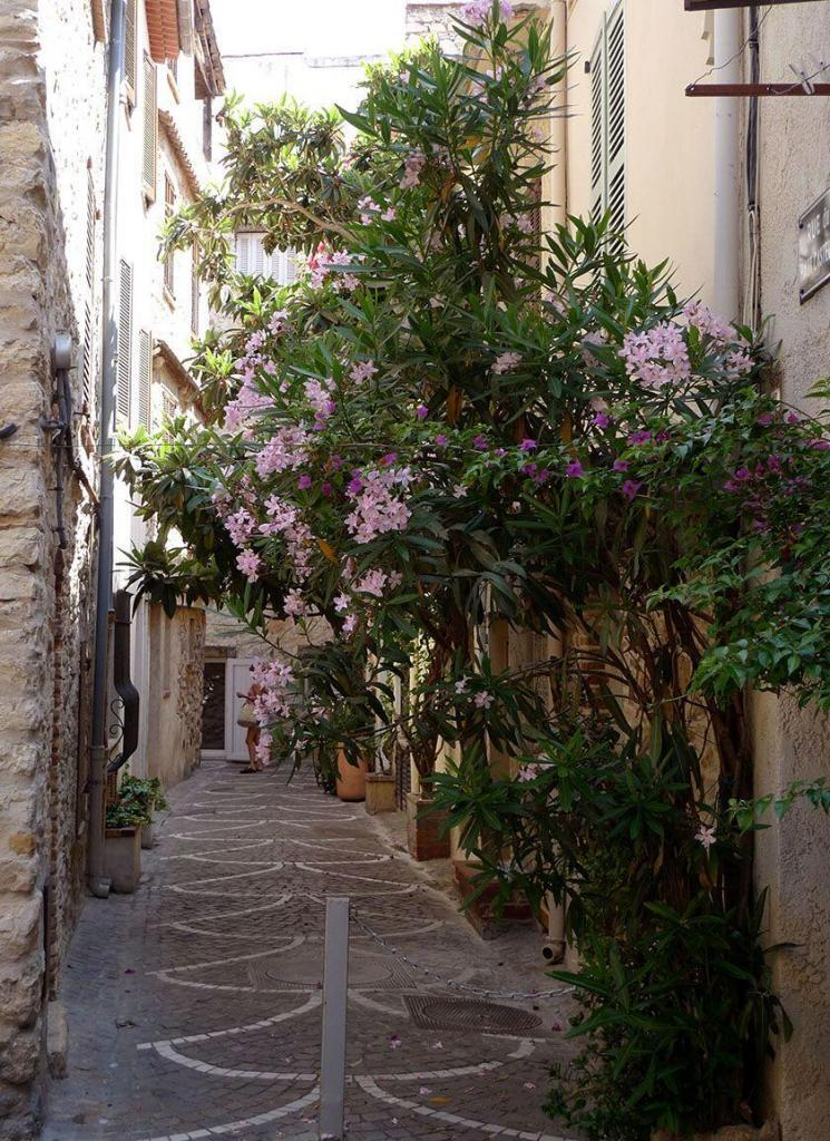 Destination Antibes French Riviera Laneways