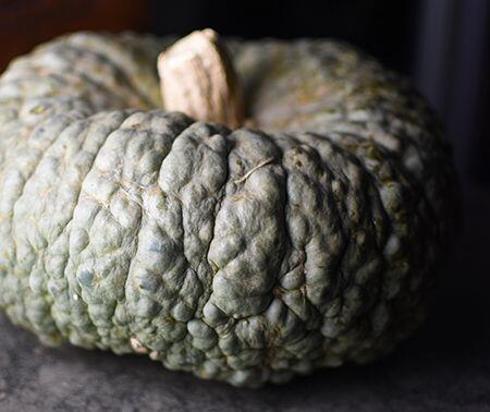 Marina di Chioggia Pumpkin