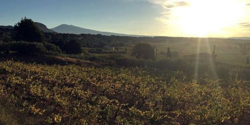 AOC Ventoux Wines Beaumes-de-Venise