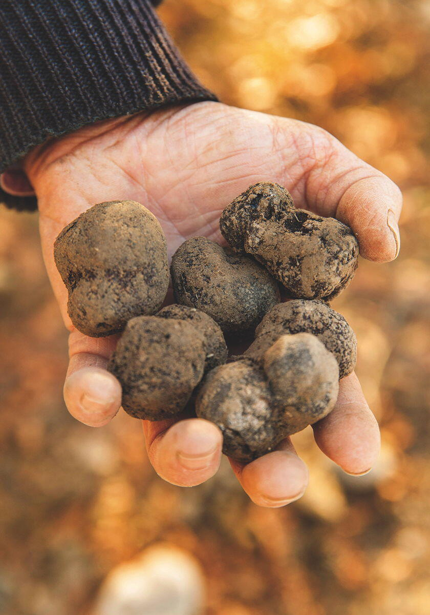 Culinary Adventure Provence Truffles