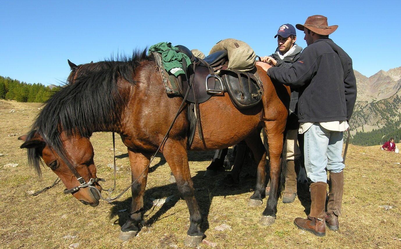 Grande Traversée du Mercantour Horses