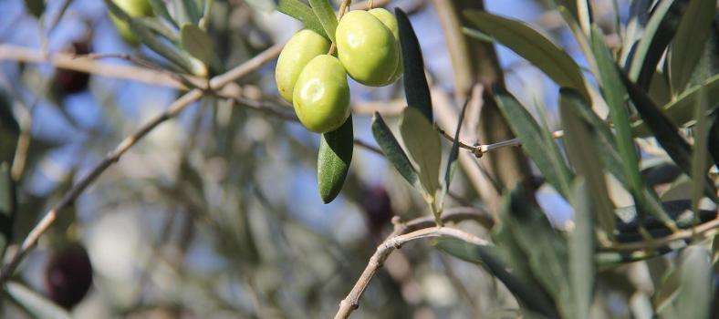 Provence Gourmet Getaway Olives
