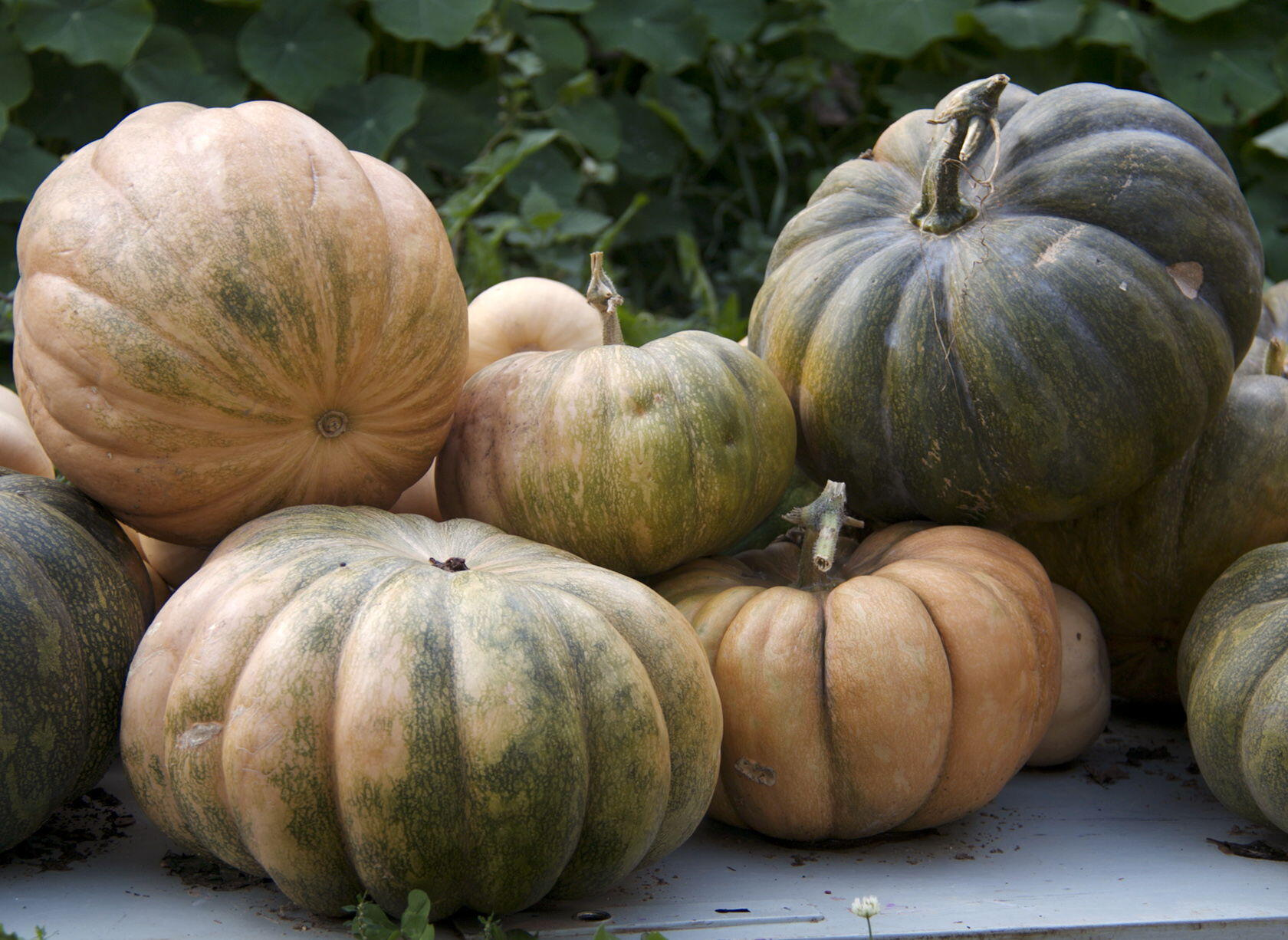 Fall Pumpkins Squash