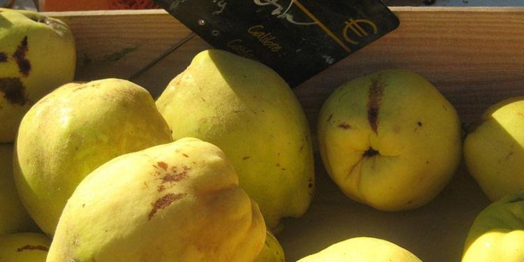Quince Almond Tarte Tatin Quince Market