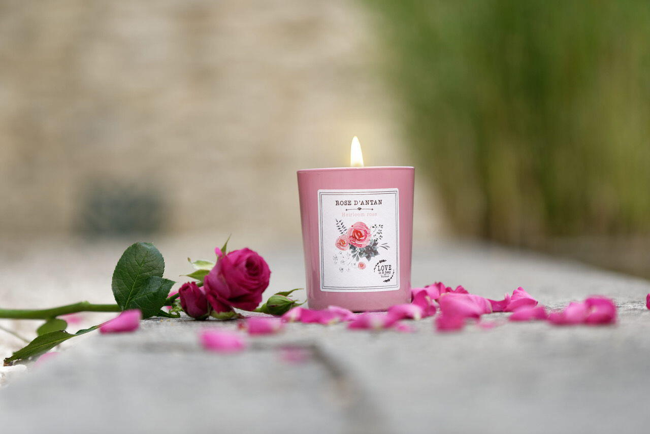 Love in St Rémy ROSE