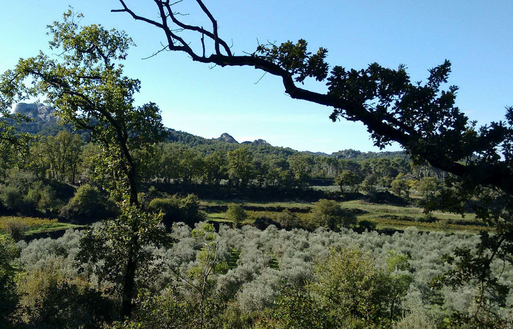 View over olive grove, Les Alpilles