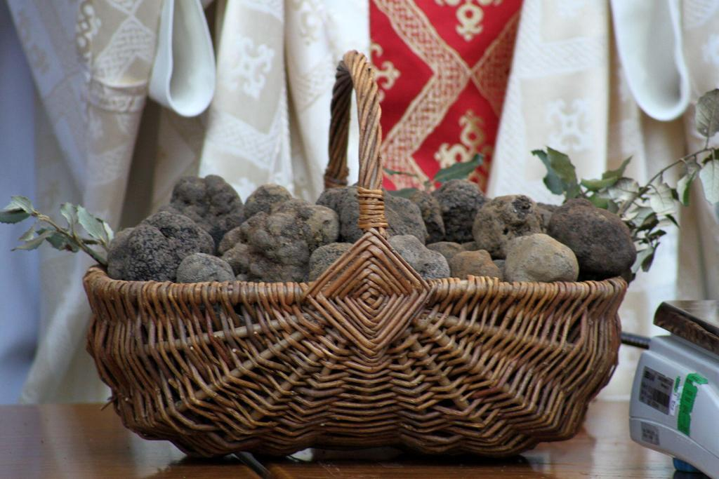 Black Truffles Hunting Provence Messe des Truffes Vaucluse