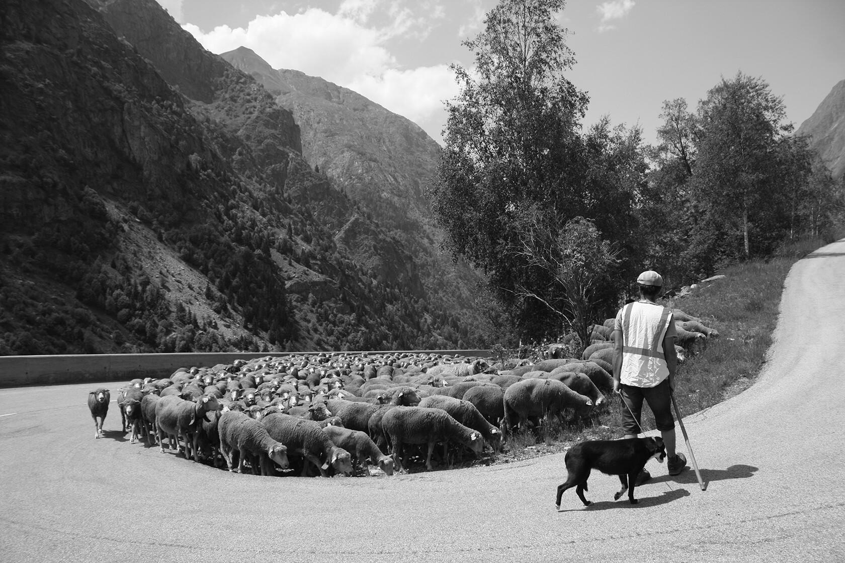 Raising Quality Merino Wool Provence