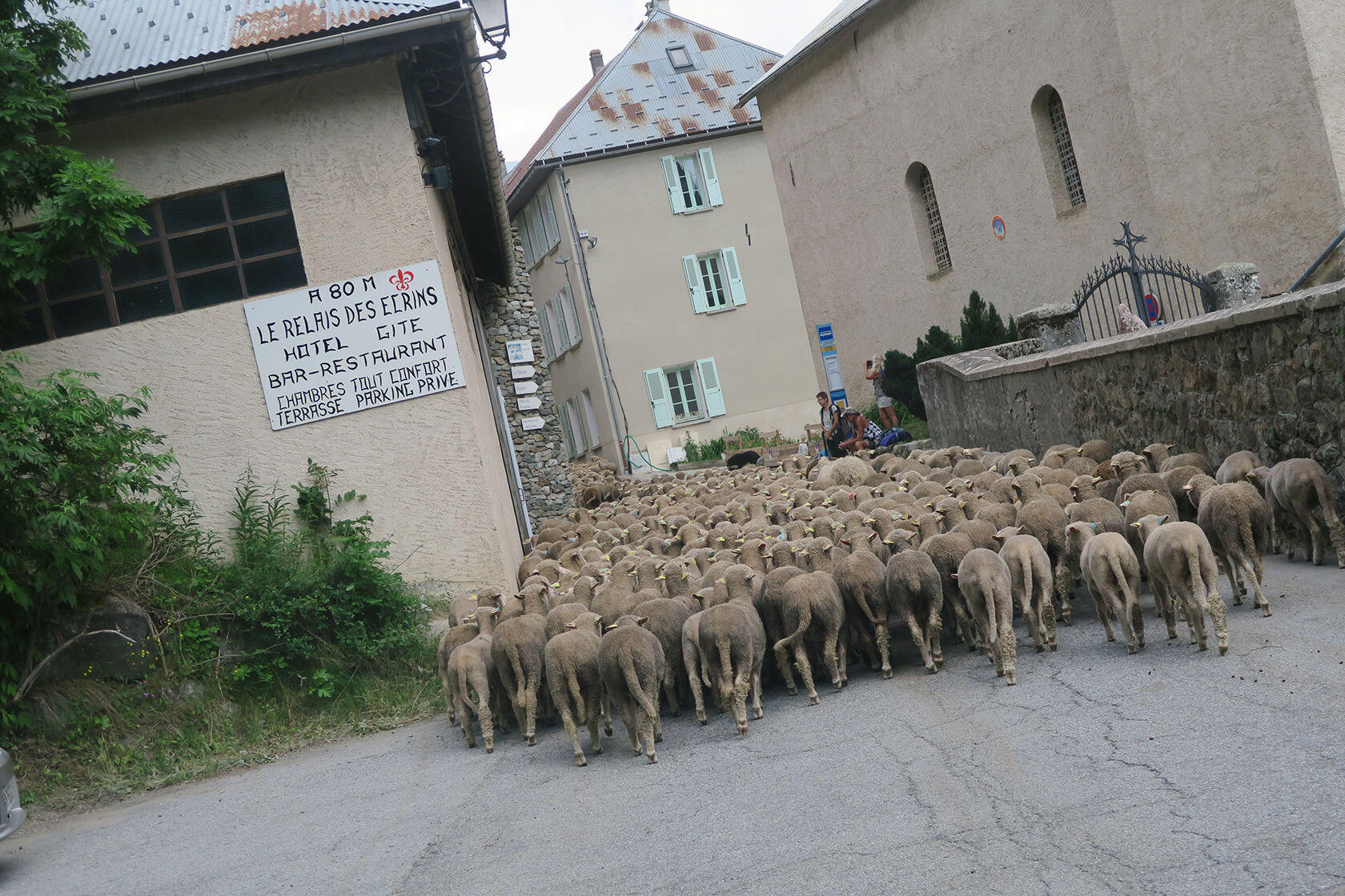 Transhumance Breeders Quality Merino Wool Provence