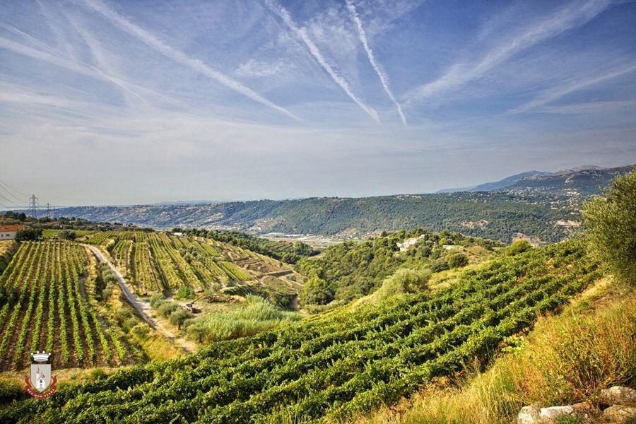 Bellet Vineyards Nice France