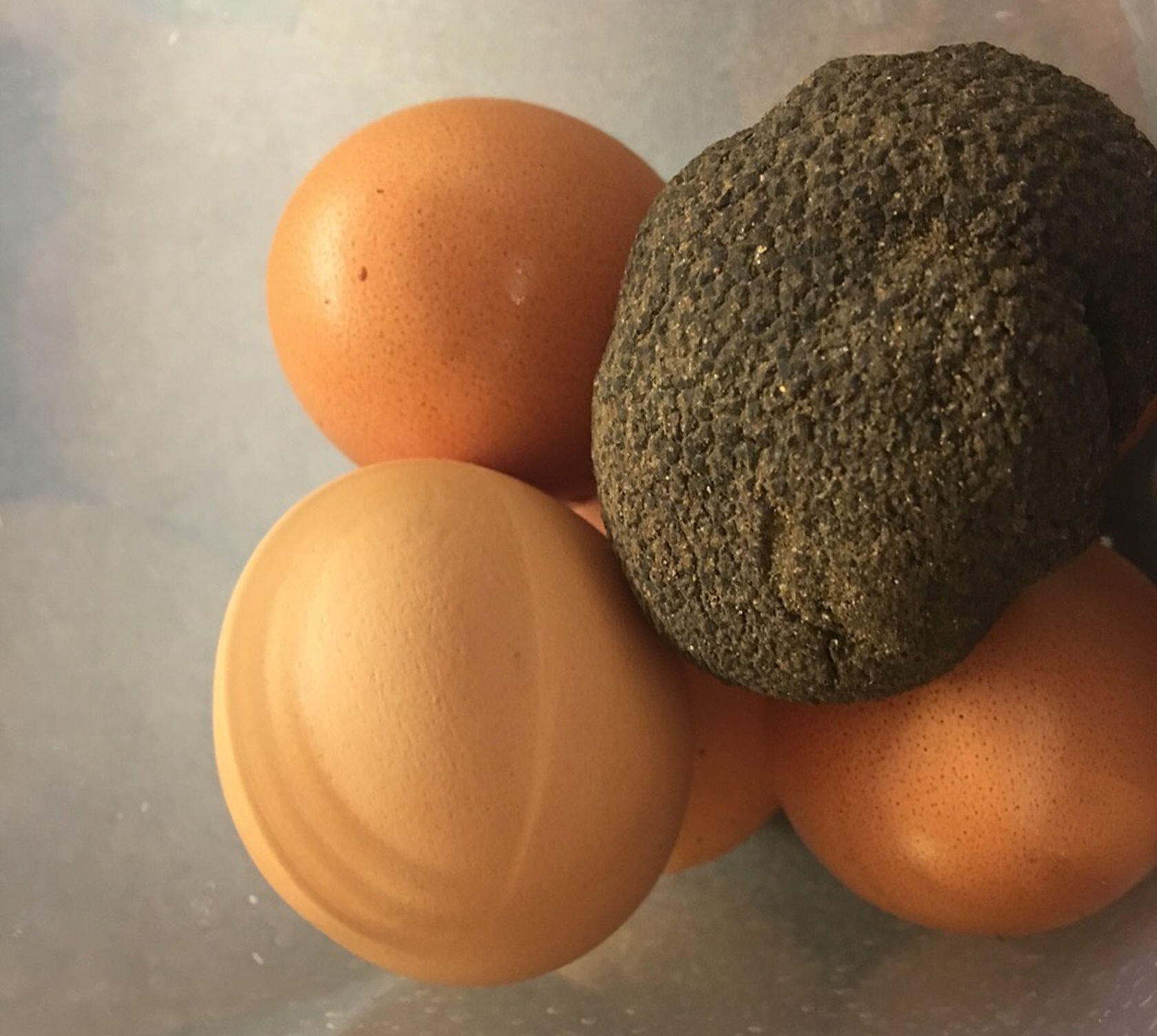 Black Truffles Eggs