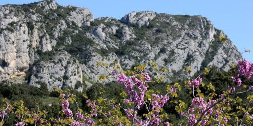 Alpilles Hiking Tips Hikers