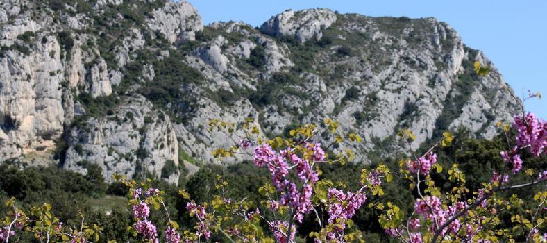 Alpilles Hiking Tips Hikers