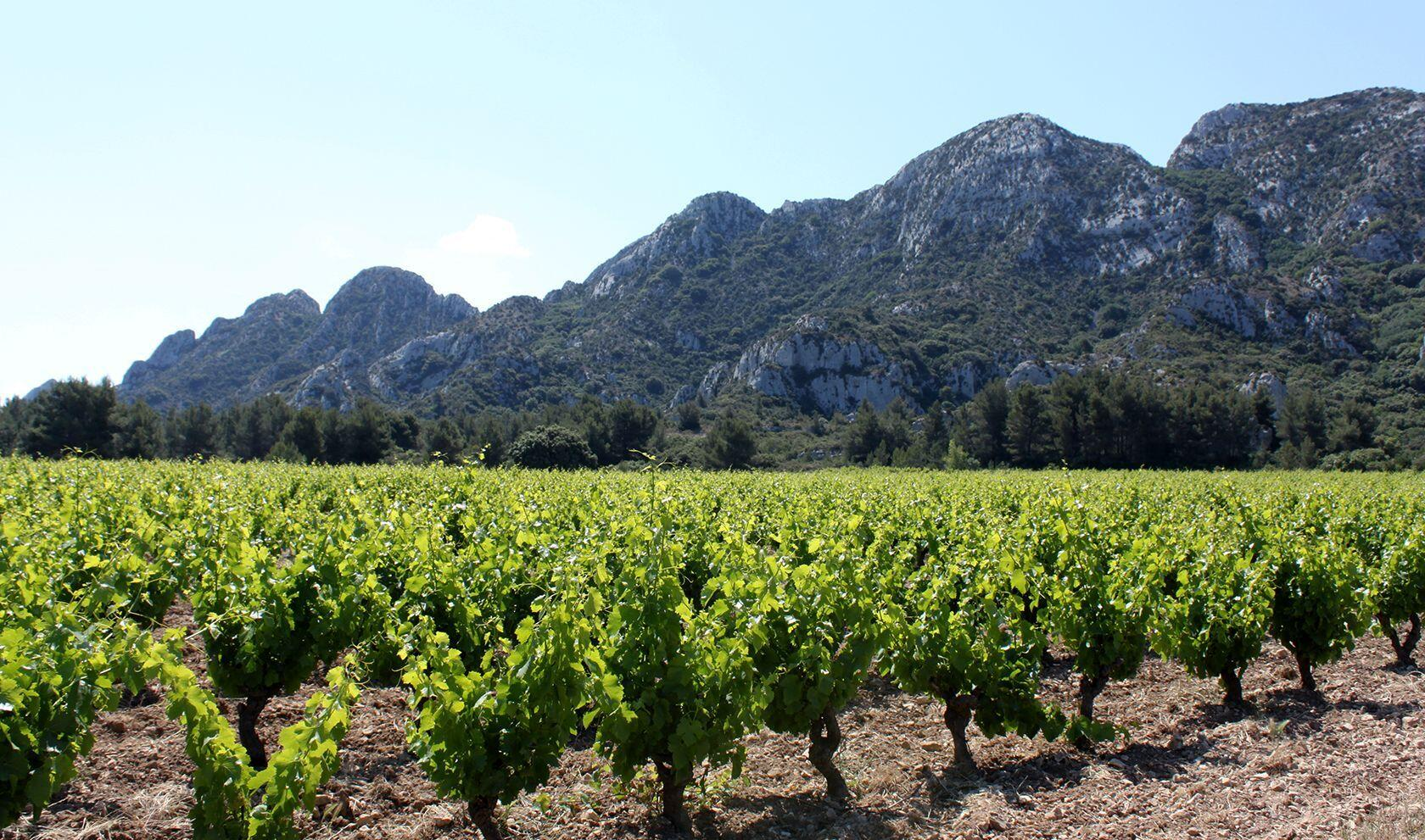 Alpilles Hiking Tips Vineyards