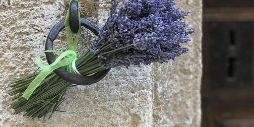 Magical Provence Lavender Experience June Lavender Tour Provence