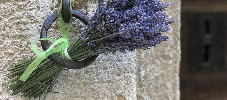 June Lavender Tour Provence