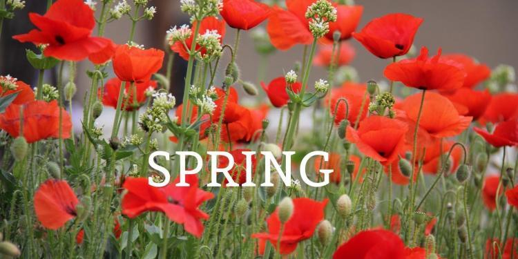 Spring Events in Provence