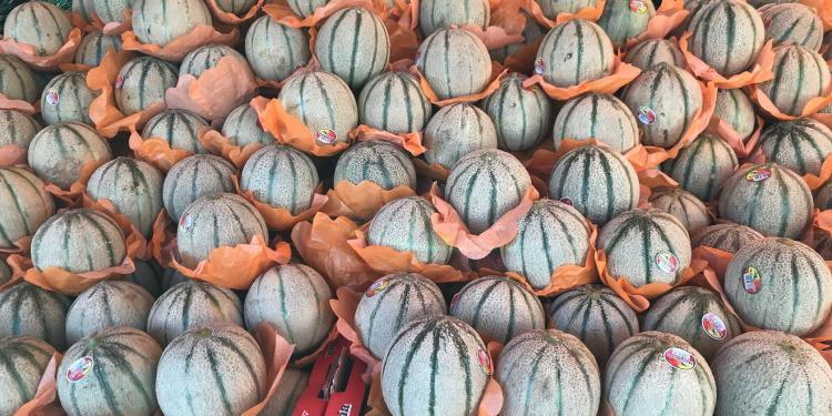 Market Cavaillon melons Provence