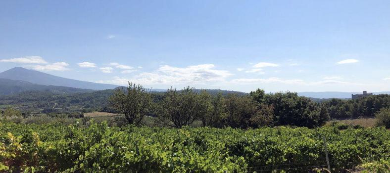 Vaucluse Vineyards Provencal Rituals Cultural Norms