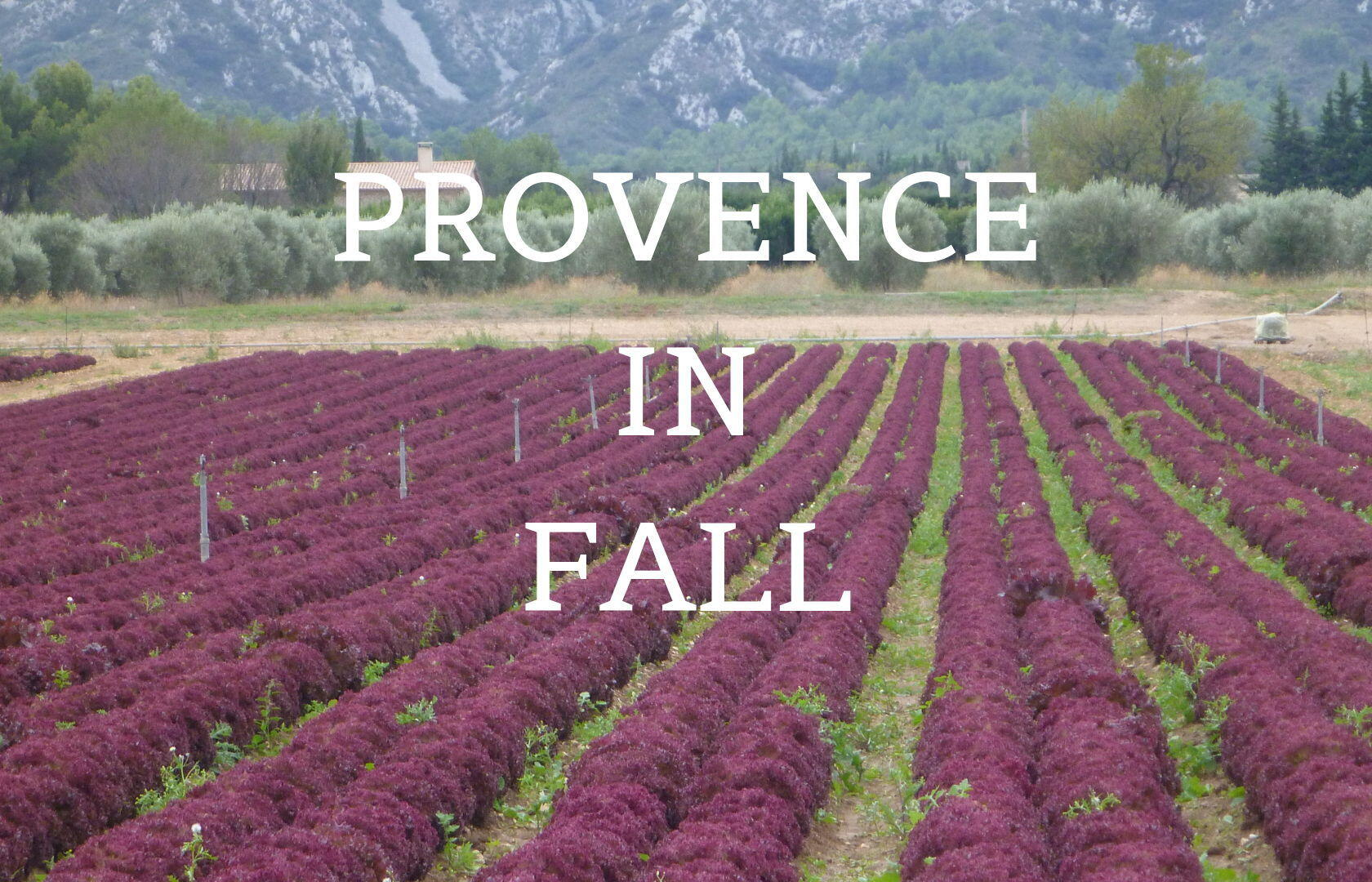 Provence Fall Festivals Flowers