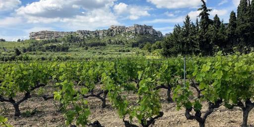Wine Mas de Sainte Berthe Alpilles
