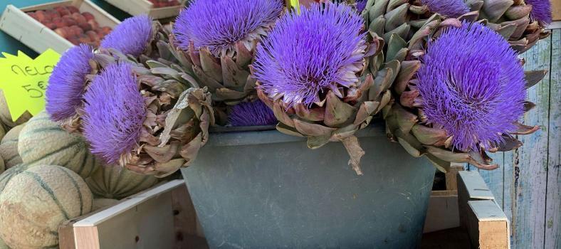 Provence Highlights Trip Planning Marseille Vieux Port Artichokes