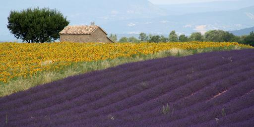Valensole Lavender Provence Highlights Trip Planning