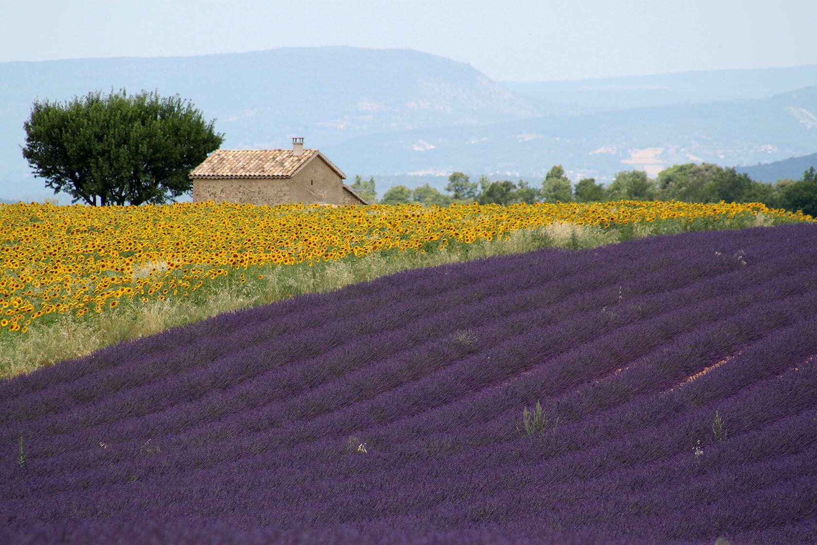 Valensole Lavender Provence Highlights Trip Planning