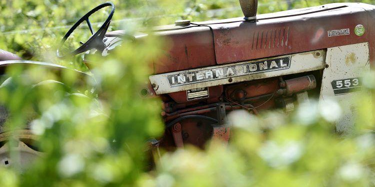 Domaine de Trévallon Vineyard Vines